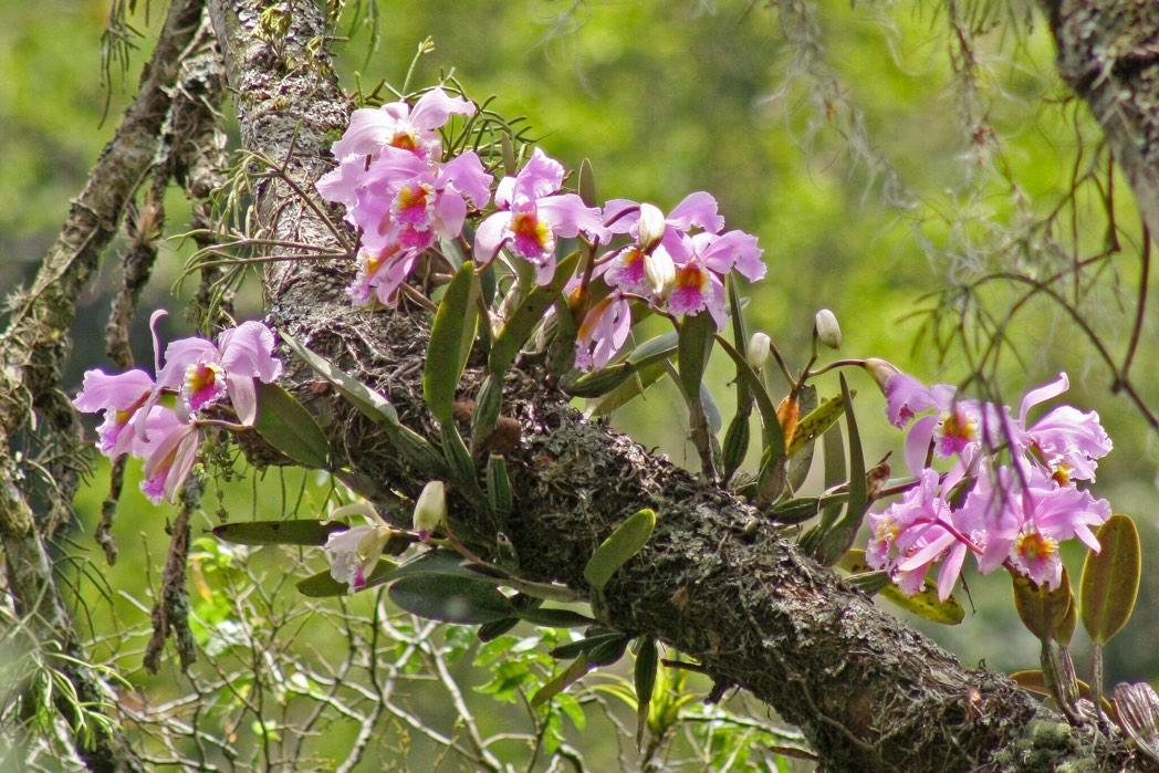 Foto von Orchideen als Danksagung