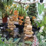 Arrangement von Orchideen mit Wasser and er Orchideen und Tillandsienschau Hirschstetten