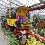 Kutsche umringt von Orchideen and er Orchideen und Tillandsienschau Hirschstetten