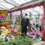 Kreativer Stand and er Orchideen und Tillandsienschau Hirschstetten