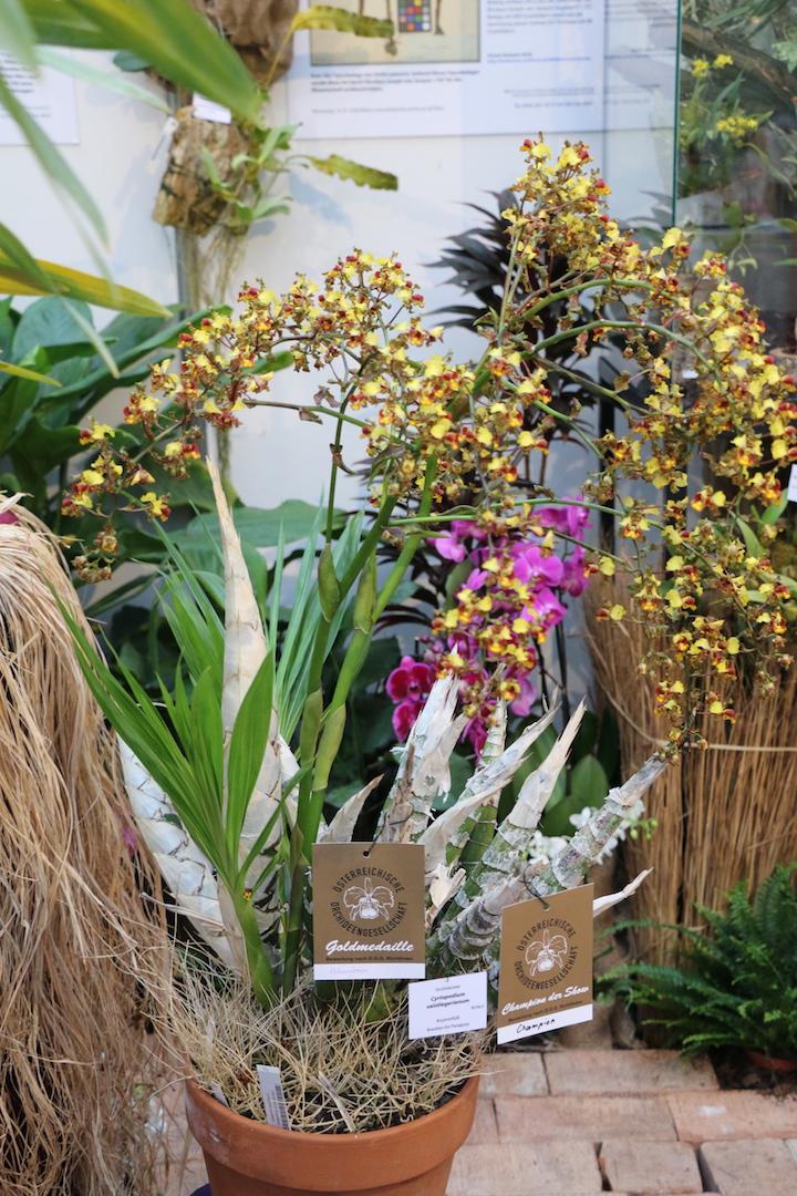 fotogalerie orchideen tillandsienschau. Black Bedroom Furniture Sets. Home Design Ideas