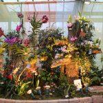 Verschiedene Pflanzen and er Orchideen und Tillandsienschau Hirschstetten