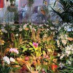 Fotos der Orchideen and er Orchideen und Tillandsienschau Hirschstetten