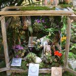 Kleines Arrangement in Holz and er Orchideen und Tillandsienschau Hirschstetten