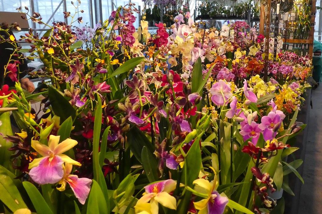 https://www.orchideenausstellung-wien.at/wp-content/uploads/2017/03/P1150776.jpg