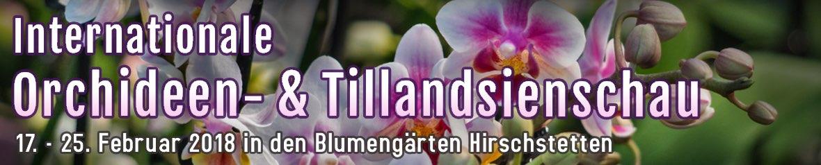 Orchideen- & Tillandsienschau